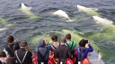 Whale watching tours.