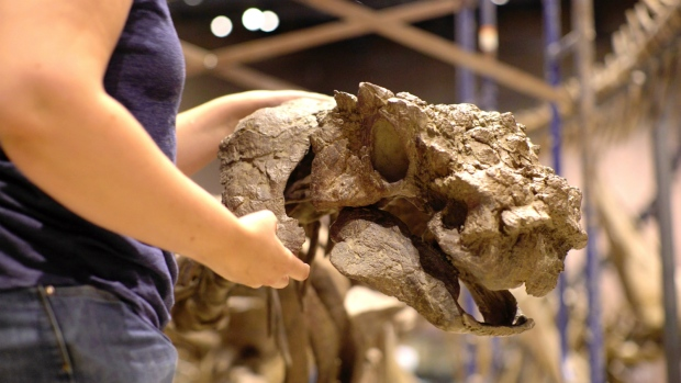 JCU opens the door, student names dinosaur