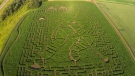 Edmonton Corn Maze created this Oilers-themed maze in 2018. Courtesy: Edmonton Corn Maze