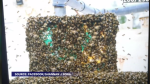 A large swarm of bees found a new home at a Cape Breton gas station. Kyle Moore reports.