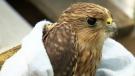 Dead or sick birds alarming wildlife group