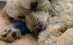 Dog park attack sparks debate
