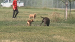 A recent dog attack at a dog park in Regina is stirring up debate.