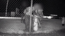 A still image from video shows three people passing through a hole in a chain-link fence. (Video provided to CTV by John David Siebenga)