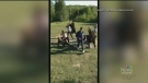 Manitoba couple's proposal goes viral