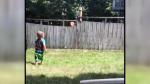 Trending: A dog, a boy, and a fence