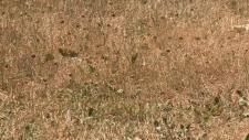Ottawa Drought