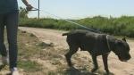 sage the dog