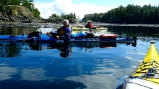 B.C. kayakers have painful run-in with a seal