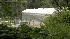 Tantalus Labs' Maple Ridge growing facility is seen in this image from July 2018.