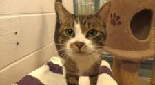 cat adoption k-w humane society
