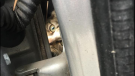 A kitten was recently rescued from a vehicle's wheel well in Virginia. (Petersburg Animal Care and Control)