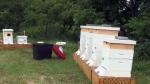 Beehives destroyed in Stratford