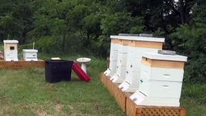 Beehives destroyed in Stratford