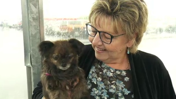 Louise Fournier said she suffers from post-traumatic stress disorder and her support dog, a Chihuahua named Bizou, is her 'everything.'