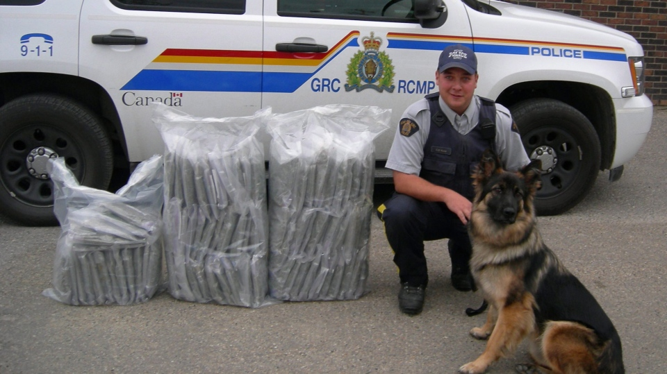 RCMP police dog Klotz poses next to seized marijuana in an RCMP handout photo. There are a number of police dogs across the country who will be out of a job before October 17, as the RCMP prepares for cannabis legalization.THE CANADIAN PRESS/HO-RCMP MANDATORY CREDIT