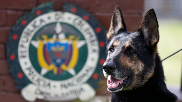 Drug cartel puts price on dog's head after cocaine bust