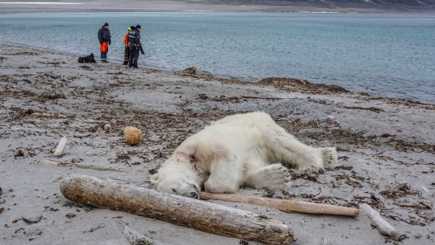 Polar bear shot dead after attacking cruise ship worker in Arctic