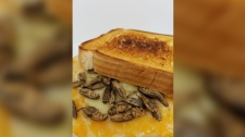Cricket grilled cheese