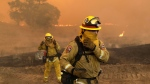 Firefighters with Cal Fire Mendocino Unit cover themselves from smoke and ash created by an advancing wildfire Monday, July 30, 2018, in Lakeport, Calif. (AP Photo/Marcio Jose Sanchez, File)