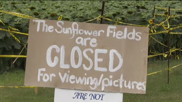 The owner of Bogle Seeds farm in Hamilton, Ont. says they're closing to the public for the foreseeable future.