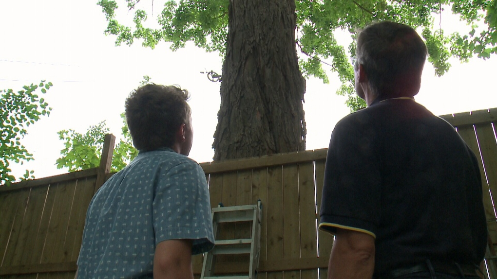 Richard Deadman and his son look at maple tree