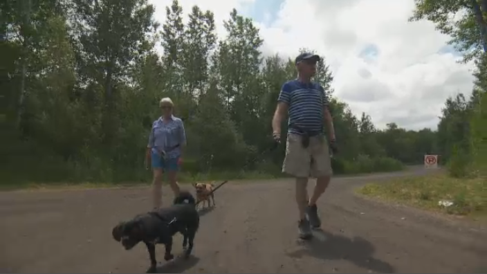 New Brunswick's chief veterinarian, Dr. James Goltz, told a news conference that necropsies on two dogs determined all three died following exposure to anatoxins, the toxic substances produced by cyanobacteria, which are commonly known as blue-green algae.