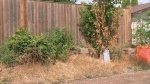 Hot, dry July puts trees at risk