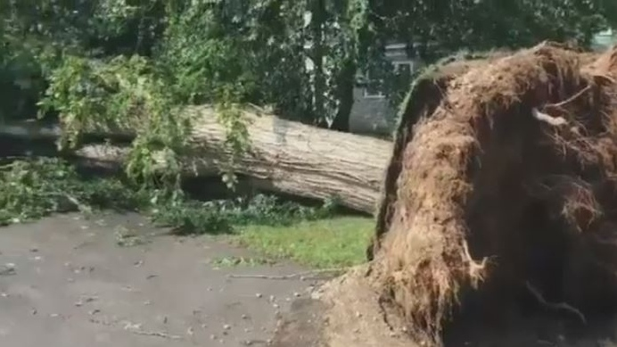 A downed tree is seen in Fredericton on Aug. 7, 2018, the morning after an intense thunderstorm moved through the city. (Nick Moore/CTV Atlantic)