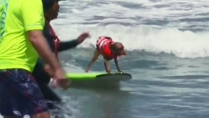Trending: Dogs on surfboards