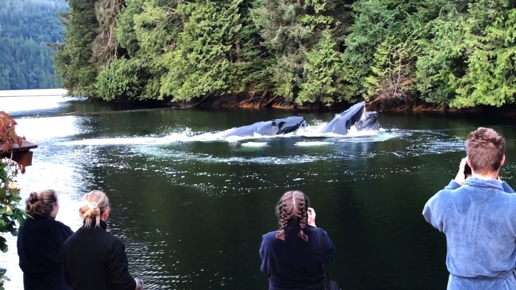 Humpback whale entertains visitors in B.C.