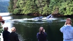 Humpback whales entertain visitors to Great Bear Lodge in Port Hardy, B.C. in this still frame from a handout video. Tourists staying at a lodge on a Vancouver Island were treated to a spectacular show when a group of humpback whales visited for breakfast. Marg Leehane, co-owner of Great Bear Lodge in Port Hardy, decided it was worth waking up the guests at 6 a.m. Saturday when the whales approached the docks. (THE CANADIAN PRESS/HO, Marg Leehane)