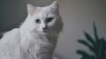 Winnipeggers shared photos of their favourite felines to social media Wednesday for International Cat Day. Source: Rebecca Henderson/Twitter.