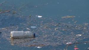 Sewage Lake Ontario