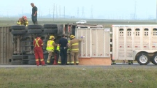 Cattle truck, truck crash, Stoeny Trail, Country H