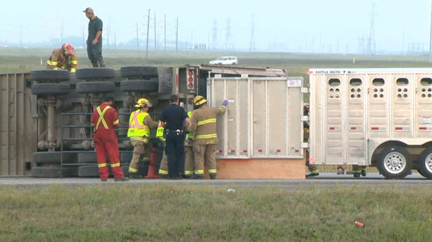 The northbound lanes of Stoney Trail, north of Country Hills Blvd., was closed after a cattle truck rolled on Friday morning.