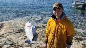 Albert Netser shared this photo on Twitter of his son's first beluga whale harvest in Nunavut. (Albert Netser/ Twitter)