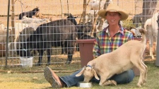 Cailey Chase and her goats