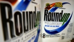 In this June 28, 2011, file photo, bottles of Roundup herbicide, a product of Monsanto, are displayed on a store shelf in St. Louis. (AP Photo/Jeff Roberson, File)