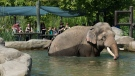 The Columbus Zoo and Aquarium announced Saturday, Aug. 11, 2018 that one of its Asian elephants is pregnant. (Columbus Zoo and Aquarium/ Facebook)