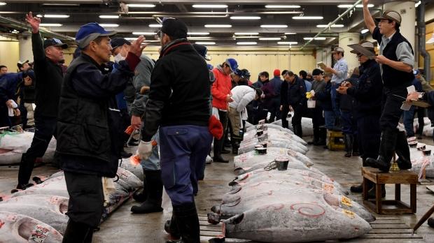 Frozen tuna being auctioned