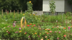 Residents at a New Hamburg retirement community spend time outdoors tending to a garden.