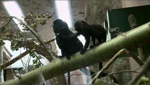 monkey saskatoon zoo