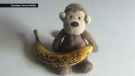 Darren Hailes has been sharing photos of 'George' on Twitter as he attempts to find the monkey's rightful owner