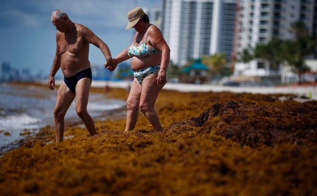 Beachgoers make their way through seaweed