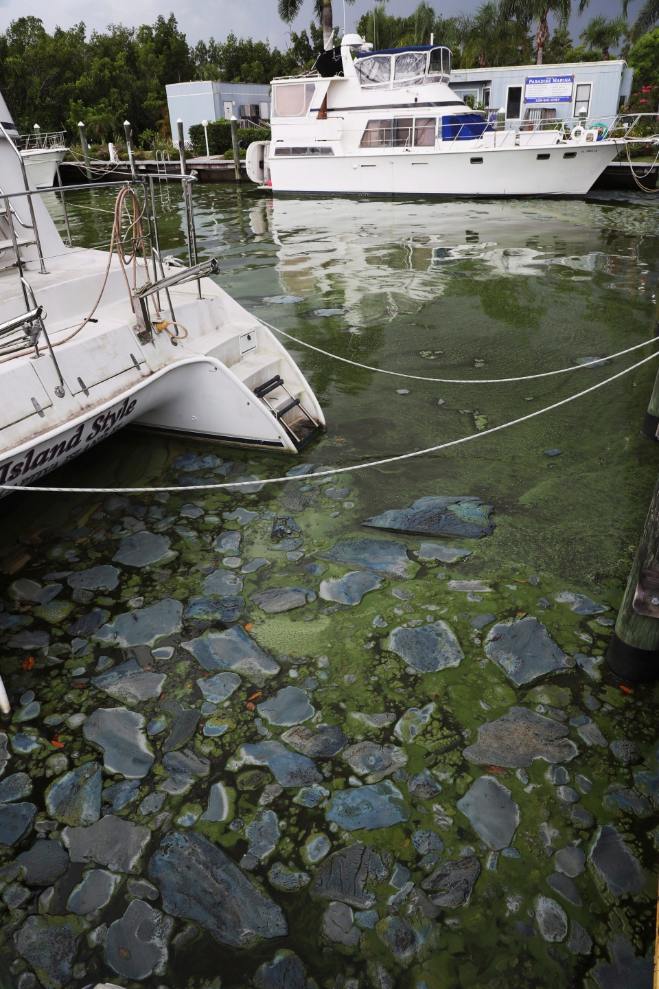 Patches of algae are seen at Paradise Marina in North Fort Myers, Fla., on Tuesday, July 10, 2018. (Andrew West/The News-Press via AP)