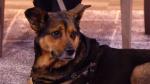Dog-friendly beer garden at SPCA charity walk