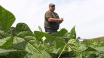Farmers growing to support food programs
