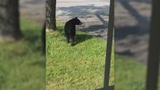 Move along Mr. Bear!