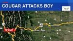 Cougar attack near Fernie (GoogleMaps)